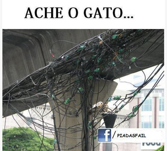 gato aonde