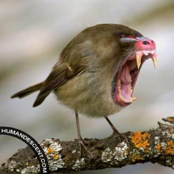 monkey-bird-funny