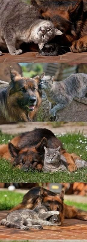 jovem pastor flagrado trocando carinhos com gatinha