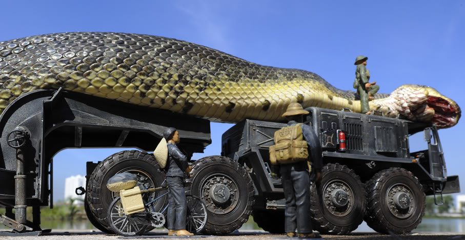 The largest anaconda Maior cobra do mundo  (6)