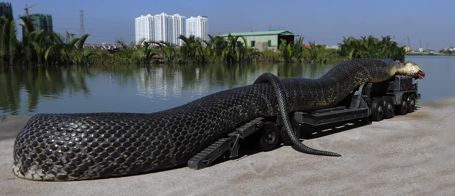 The largest anaconda Maior cobra do mundo  (7)