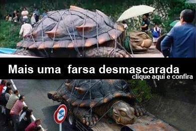 desmascara tartaruga gigante