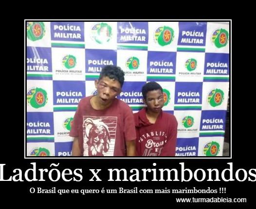 Ladrões x marimbondos. O Brasil que eu quero é um Brasil com mais marimbondos !!!